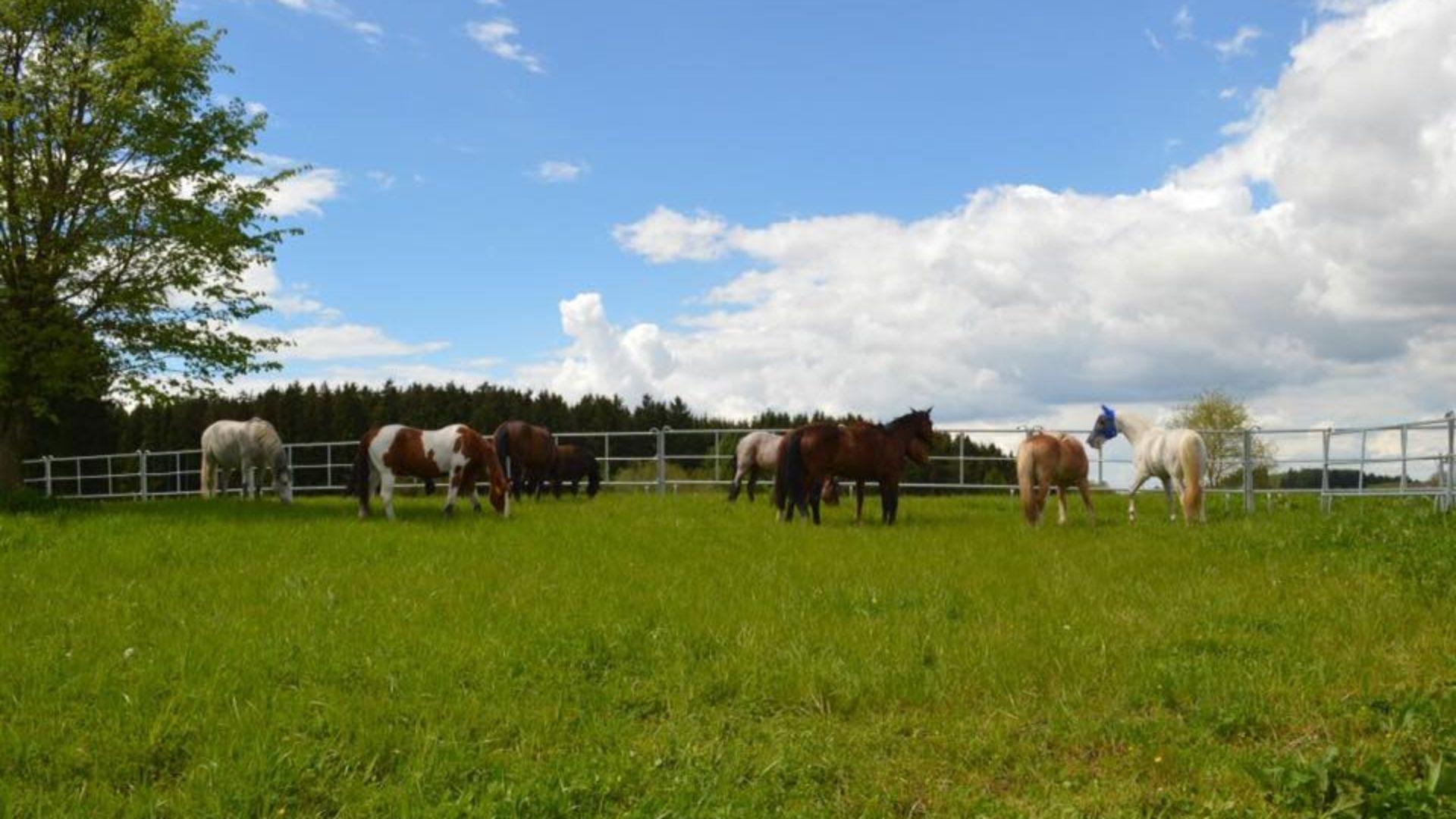 Trailstable der Aktivstall nach dem Paddock Trail Prinzip in Geierseck bei Dorfen